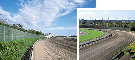 Racehorse Training Racecourse